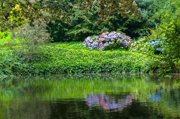 Wightwick Manor photo, Reflections in a quiet garden pond