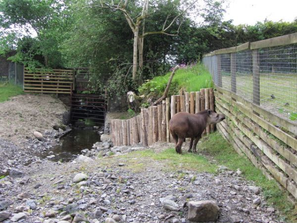 Lake District Wildlife Park photo, A tapir (c) Gareth James