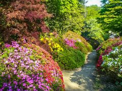 Winkworth Arboretum, Colourful summer flowers (c) Colin Smith