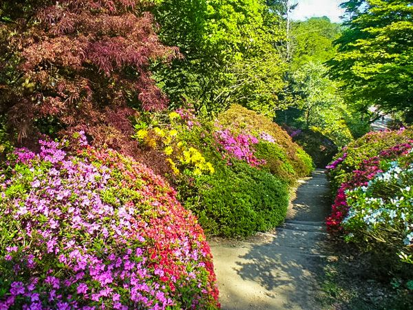 Winkworth Arboretum photo, Colourful summer flowers (c) Colin Smith