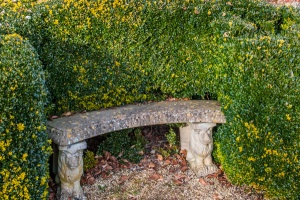 A quiet bench sheltered by topiary hedges