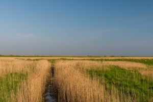 Looking across Cley Marshes NNR