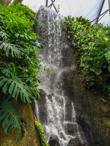 The rainforest waterfall