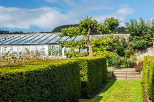 Clipped hedges and a garden greenhouse