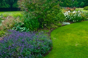 Sinuous flower beds in the garden