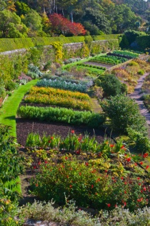 Walled garden beds