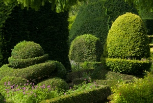 There are such a variety of topiary size, shapes, and colours!