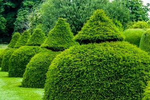 An avenue of clipped topiary