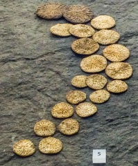 Iron Age gaming tokens