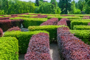Hedge maze in the gardens