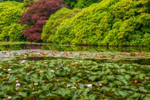 Lily pads add colour to the lakes