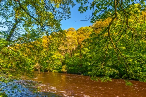 Ayr Gorge Woodland and the River Ayr