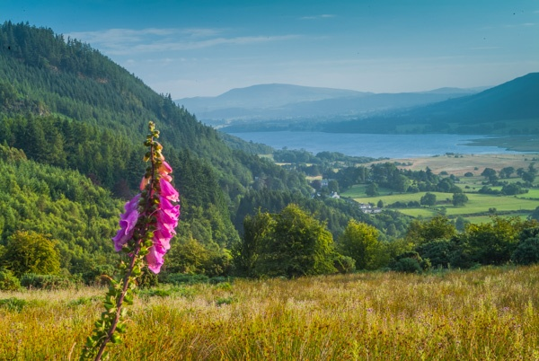 Bassenthwaite Lake from Whinlatter Pass