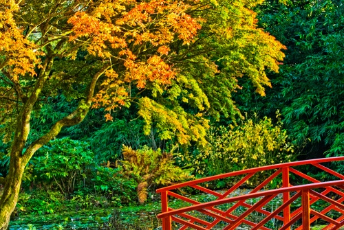 The Oriental Bridge at Batsford Arboretum