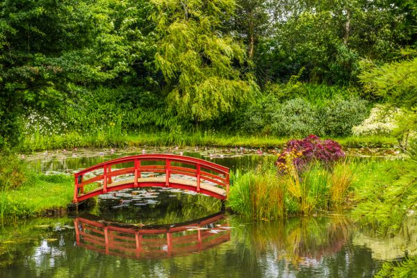 June Water Lilies In Bloom The White Lily Pond A Picturesque Oriental Footbridge