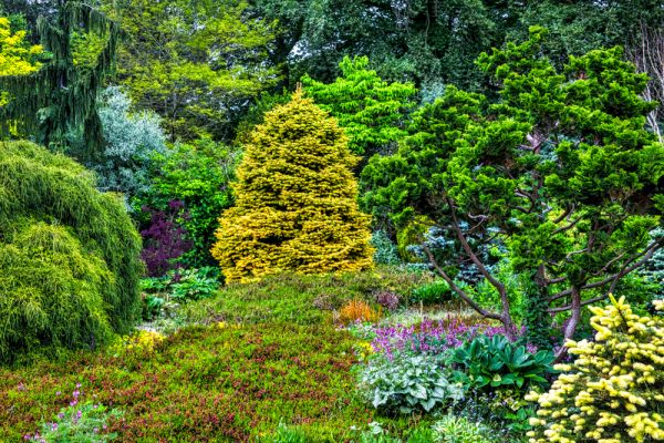 Bressingham Steam and Gardens photo, Conifers in the Dell Garden