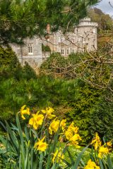 Daffodils and a glimpse of the castle
