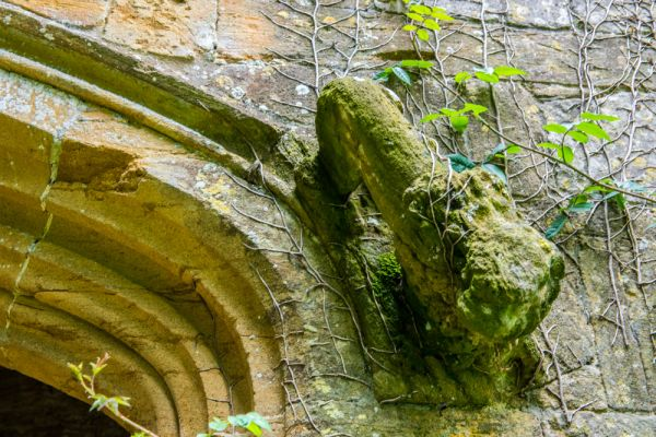 Cerne Abbey photo, Carved lion on the Abbot's Porch gateway