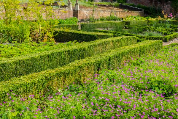 Chipchase Castle photo, Clipped hedges in the formal walled garden