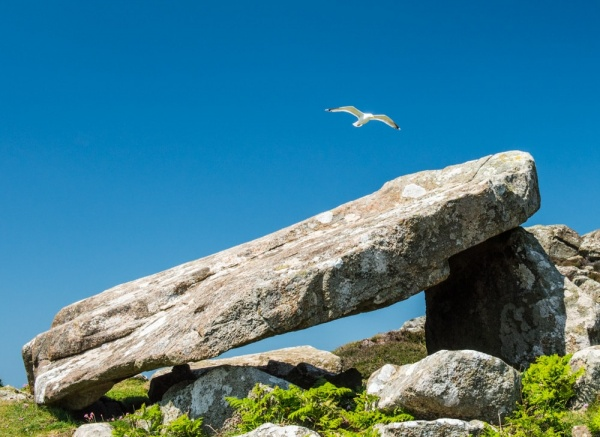 A gull hovers over Coetan Arthur Burial Chamber