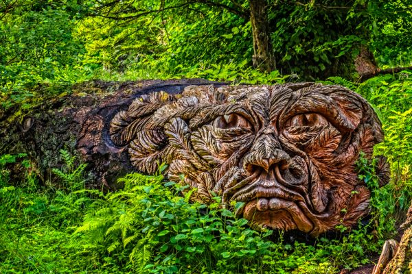 Cragside photo, An extraordinary carving from a fallen tree at Cragside