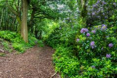 A colourful path through Dinton Woods