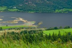 Bassenthwaite Lake from Dodd Wood