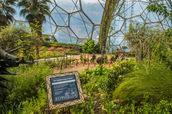 Eden Project photo, Inside the Mediterranean Biome