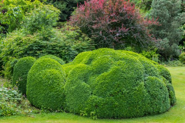 Edmondsham House and Gardens photo, Topiary on the west lawn