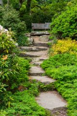 Steps in the Rock Garden