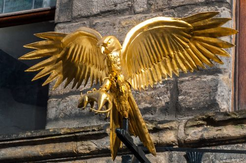 The gilded 'gled', or hawk