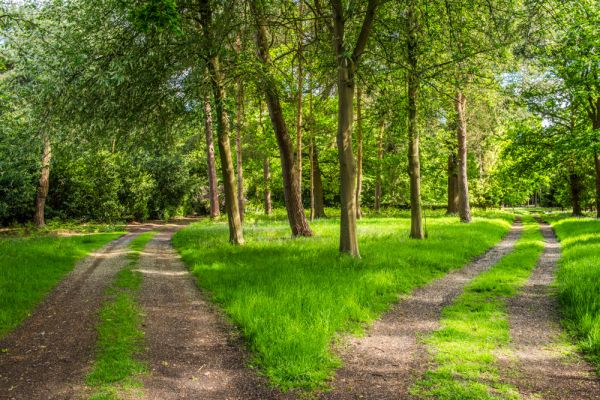 The Meeting Of Two Woodland Paths