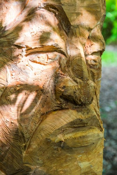 Haughley Park photo, A woodland sculpture carved from a tree trunk