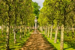Houghton Hall, The pleached lime aveneue in spring