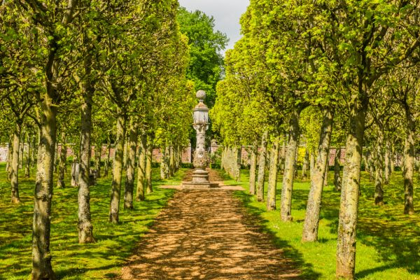 Houghton Hall photo, The pleached lime aveneue in spring