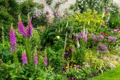 Colourful herbaceous borders in June