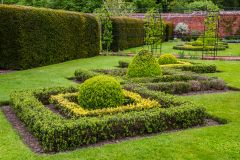 Clipped hedges in the walled garden