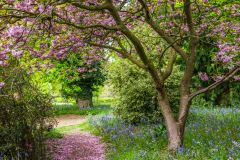 Summer blossoms on a garden path