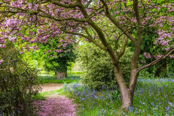 Hoveton Hall Gardens photo, Summer blossoms on a garden path