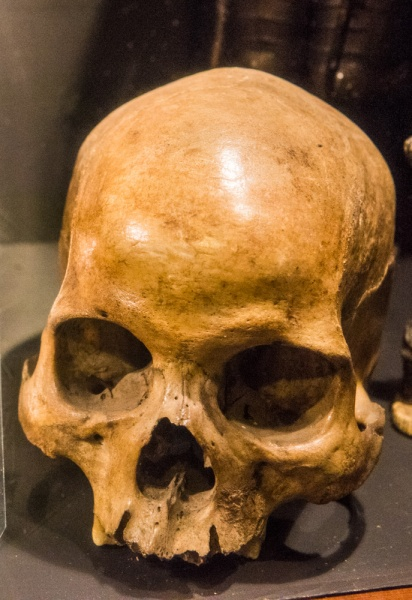The smuggler's skull from Abbey Burnfoot