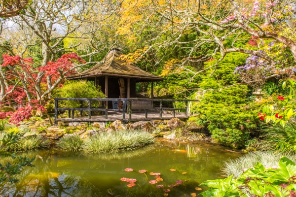 The koi pond and ceremonial teahouse in the Japanese Garden