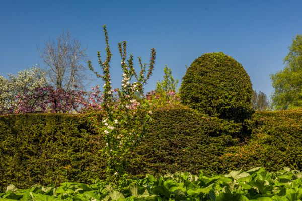 Mannington Hall Gardens photo, Clipped hedges and topiary in summer
