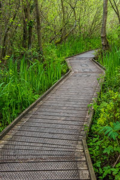 Ranworth photo, A boardwalk through Carr Woodland nature reserve
