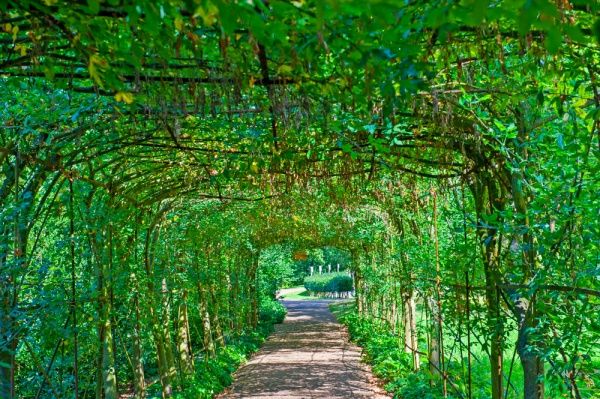 A shady tunnel in Pembroke Lodge Gardens