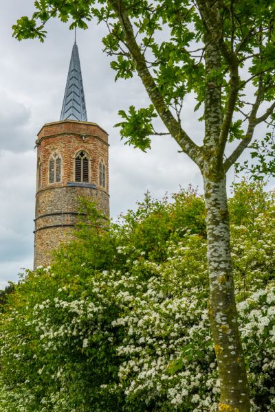 Shimpling, St George's Church photo, St George's spire peeping over the trees