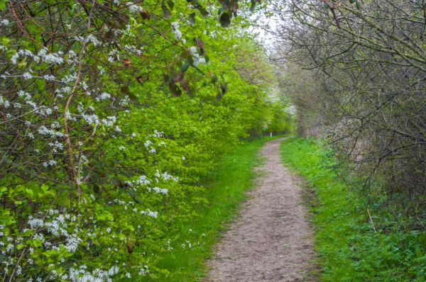 South Elmham Minster photo, The trail to the Minster