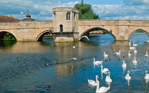 Swans on the River Great Ouse at St Ives