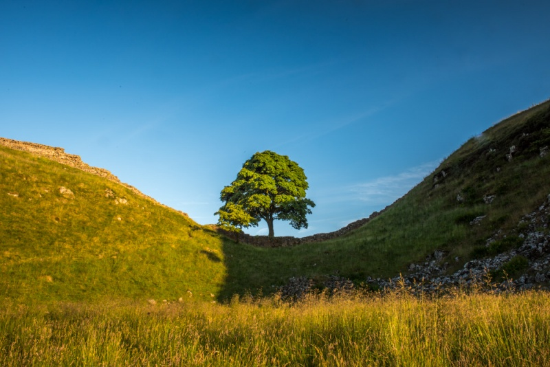 Sycamore Gap and The Robin Hood Tree