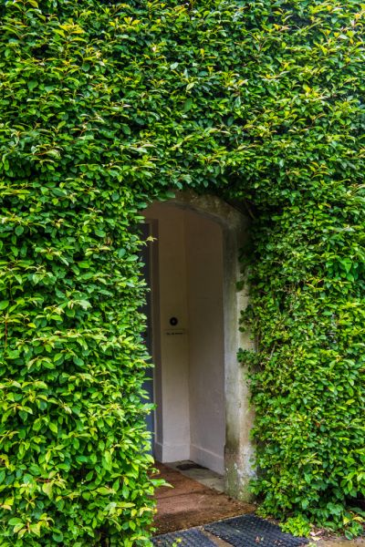 Toller Fratrum photo, A cottage doorway shrouded in ivy
