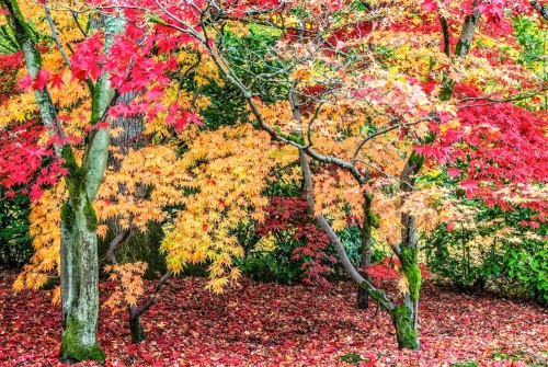 Westonbirt Arboretum at its colourful best